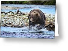 Brown Bear Spotting Salmon In Water Greeting Card by Dan Friend