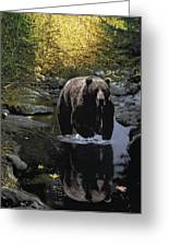 Grizzly Reflection Greeting Card by Brent Ander