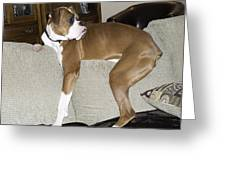 Gruff Looking Boxer Puppy On Couch Greeting Card by Tony Moran