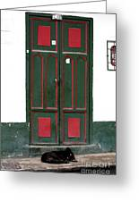 Guard Dog In Sopo Greeting Card by John Rizzuto