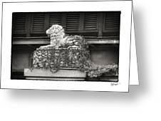 Guardian In Black And White Greeting Card by Brenda Bryant