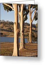 Guardians Of The Lake Greeting Card by Linda Lees