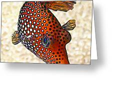 Guinea Fowl Puffer Fish Greeting Card by Bill Caldwell -        ABeautifulSky Photography