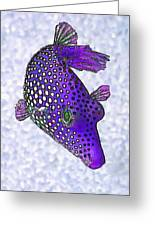Guinea Fowl Puffer Fish In Purple Greeting Card by Bill Caldwell -        ABeautifulSky Photography