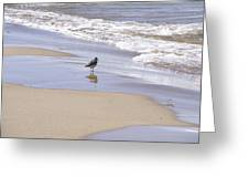 Gull On The Shore Greeting Card by Richard Gregurich