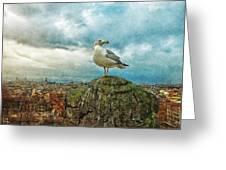 Gull Over Rome Greeting Card by Jack Zulli