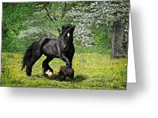 Gypsy Stallion Shadow Greeting Card by Fran J Scott