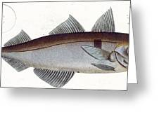 Haddock Greeting Card by Andreas Ludwig Kruger