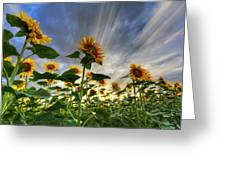 Halleluia Greeting Card by Debra and Dave Vanderlaan