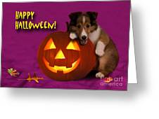 Halloween Shetland Sheepdog Greeting Card by Jeanette K