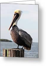 Handsome Brown Pelican Greeting Card by Carol Groenen
