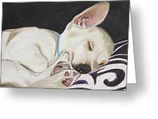 Hanks Sleeping Greeting Card by Jeanne Fischer