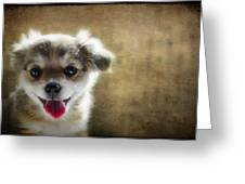 Happiness Is A Little Puppy Greeting Card by Lisa Knechtel