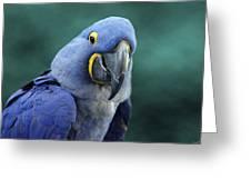 Happy Bird Greeting Card by David Simons