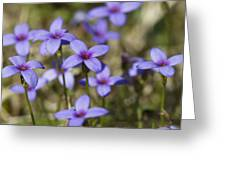 Happy Tiny Bluet Wildflowers Greeting Card by Kathy Clark