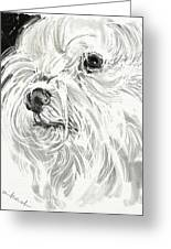 Harley The Maltese Greeting Card by Linda Minkowski