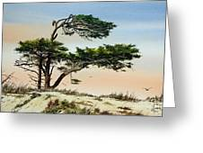 Harmony Of Nature Greeting Card by James Williamson