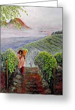 Harvest At Dawn Greeting Card by Michael Durst