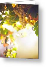 Harvest Time. Sunny Grapes I Greeting Card by Jenny Rainbow