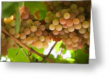 Harvest Time. Sunny Grapes II Greeting Card by Jenny Rainbow