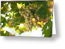 Harvest Time. Sunny Grapes Iv Greeting Card by Jenny Rainbow