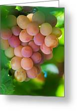 Harvest Time. Sunny Grapes Greeting Card by Jenny Rainbow
