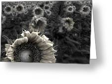 Haunting Sunflower fields 1 Greeting Card by Dave Dilli