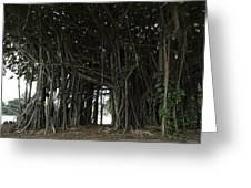 Hawaiian Banyan Tree - Hilo City Greeting Card by Daniel Hagerman