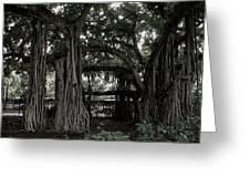 Hawaiian Banyan Trees Greeting Card by Daniel Hagerman