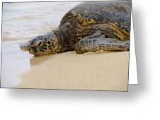 Hawaiian Green Sea Turtle 3 Greeting Card by Brian Harig