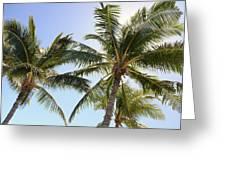 Hawaiian Palm Trees Greeting Card by Brandon Tabiolo
