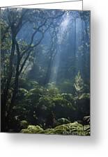 Hawaiian Rainforest Greeting Card by Gregory G. Dimijian, M.D.