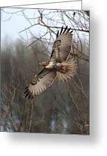 Hawk In Flight Greeting Card by Angie Vogel