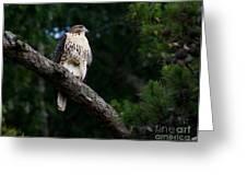 Hawk On Norris Lake Greeting Card by Douglas Stucky