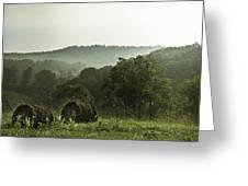 Hay Bales Greeting Card by Shane Holsclaw
