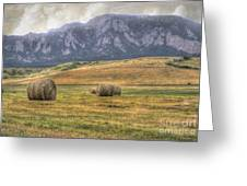 Hay There Greeting Card by Juli Scalzi