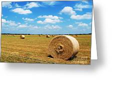 Hayfield Greeting Card by Venus