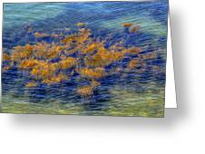 Hdr Underwater Plant Life Greeting Card by Jamie Roach