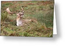 Hear Me Roar Greeting Card by Mark Severn