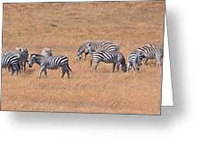 Hearst Castle Zebras Greeting Card by Lynn Bauer