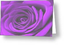 Heart Of A Purple Rose Greeting Card by SophiaArt Gallery