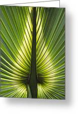 Heart Of Palm Greeting Card by Roger Leege