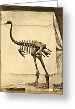 Heavy Footed Moa Skeleton Greeting Card by Getty Research Institute