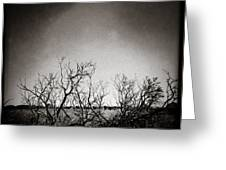 Hedgerow Greeting Card by Dave Bowman