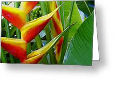 Heliconia Bihai Kamehameha Greeting Card by James Temple