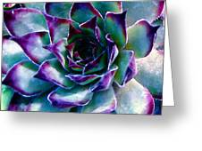 Hens And Chicks Series - Evening Hues Greeting Card by Moon Stumpp
