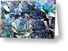 Hens And Chicks Series - Evening Light Greeting Card by Moon Stumpp