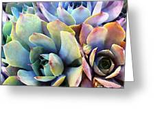 Hens And Chicks Series - Soft Tints Greeting Card by Moon Stumpp