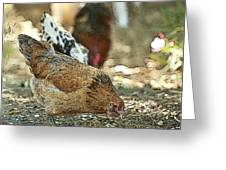 Hens Scratching Around Greeting Card by Artist and Photographer Laura Wrede