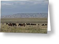 Herd Of Wild Horses Greeting Card by Juli Scalzi